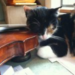 image of Daisy the cat resting on fiddle